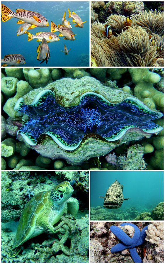 Collage of Great Barrier sealife