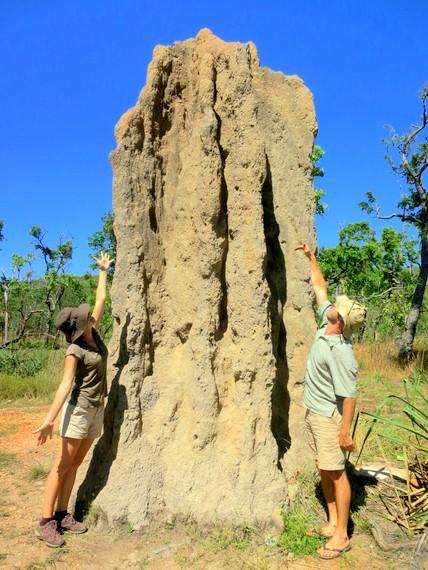 kakadu termite mounds