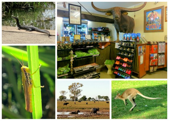 Outback animal collage