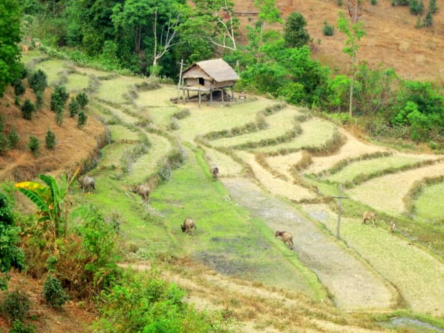 Rice Terraces of Hsipaw