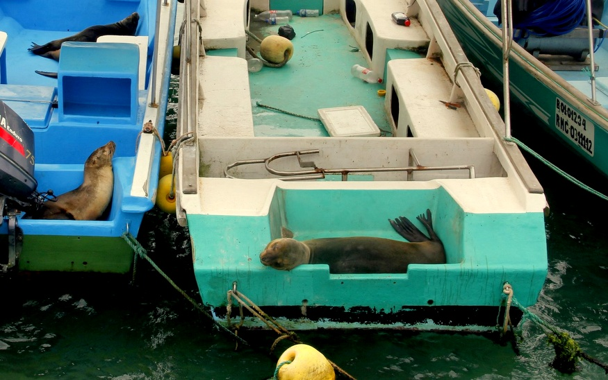 Sea Lions in a boat