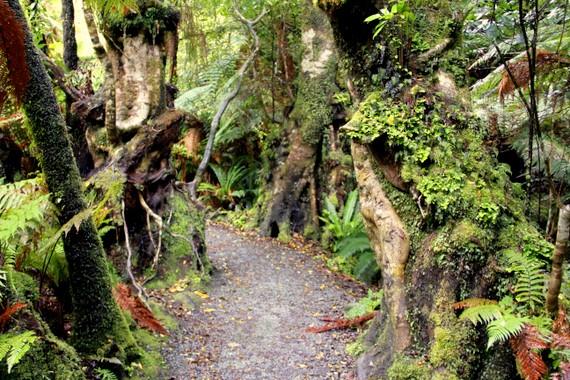 13 Catlins Forest