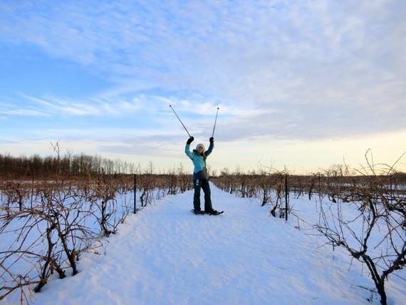 Schultze vineyard in winter