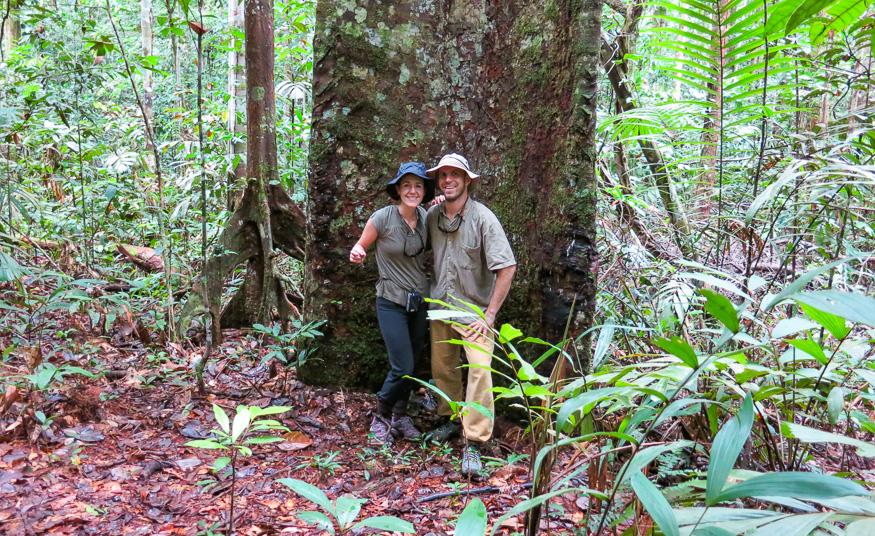 Trees of the Amazon