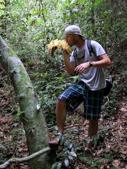 Jack fruit in Brazil