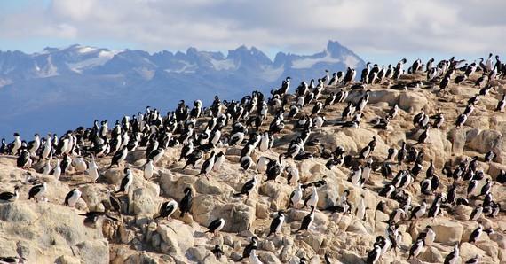 Birds of Ushuaia
