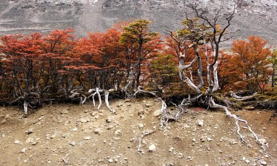 Fall foliage in Ushuaia, Tierra del Fuego