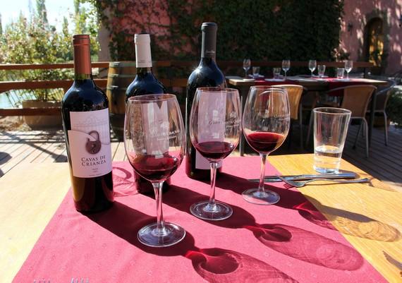 vineyards in Mendoza Argentina