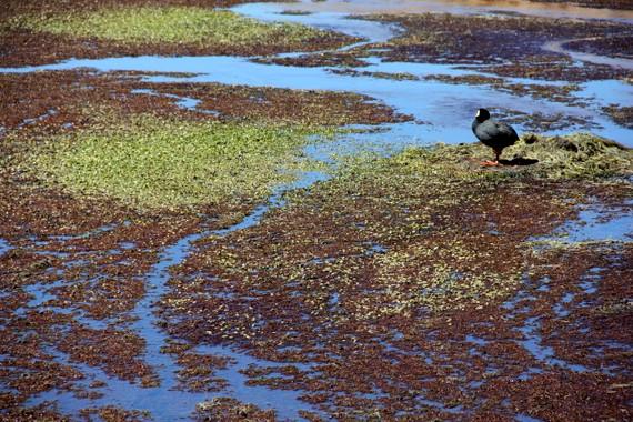 Wildlife in Atacama desert Chile