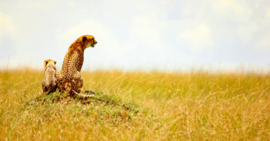The Great Maasai Mara