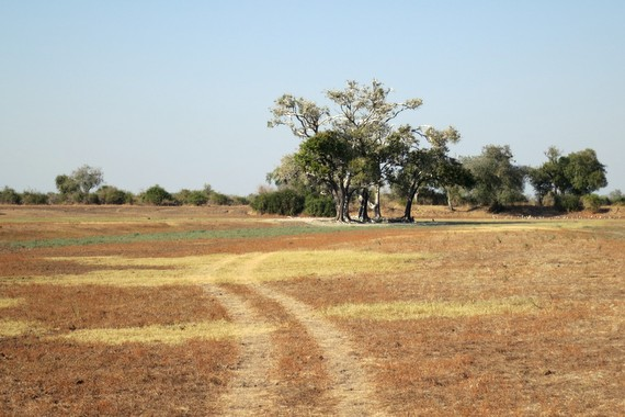 The range of landscapes in South Luangwa National Park Zambia