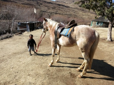 Pony trek led by a local Basotho horesman