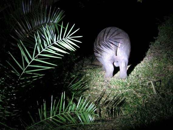 Safari in Livingstone zambia
