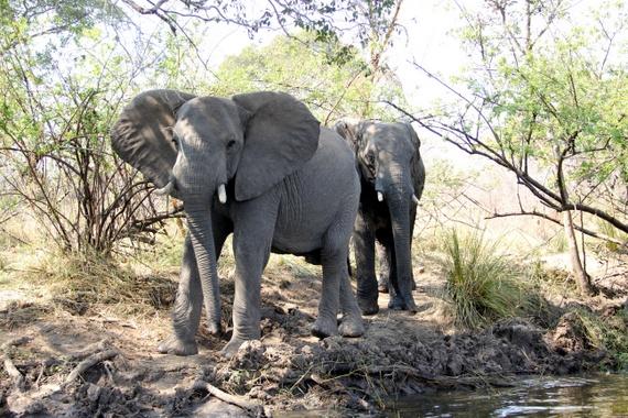 Wildlife sightingson Zambezi River