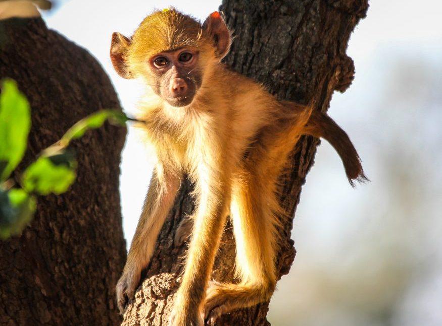 South Luangua - HoneyTrek.com-4860