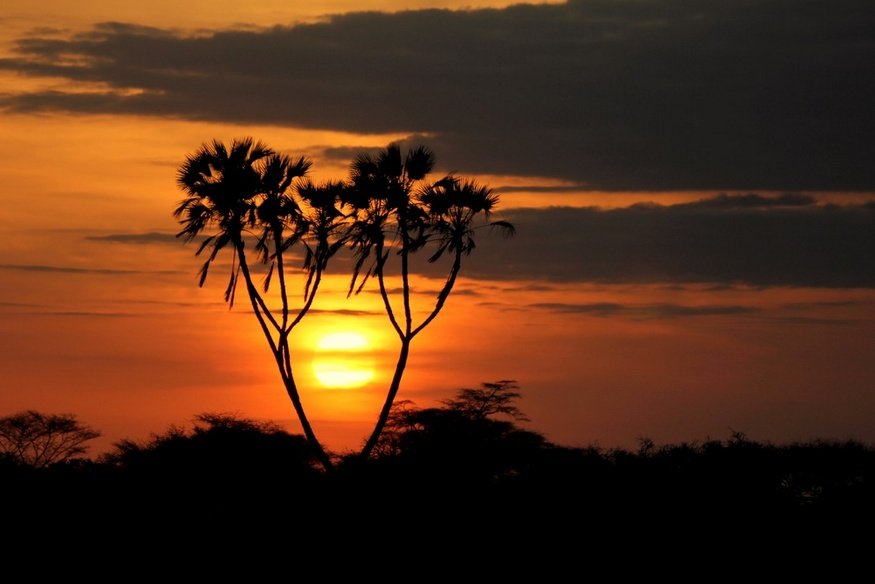 03-05-Doum Palms at sunrise-HoneyTrek.com