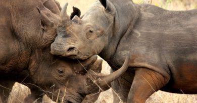 Offbeat Safaris: Meru