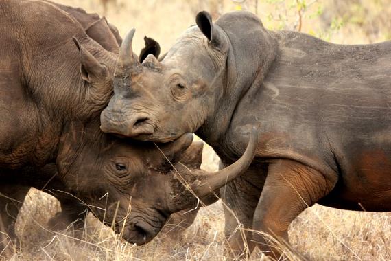 Rhino Sanctuary Meru Park