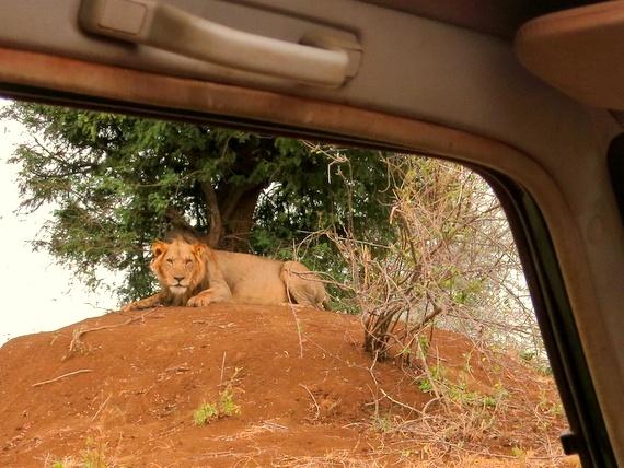 offbeat meru safaris