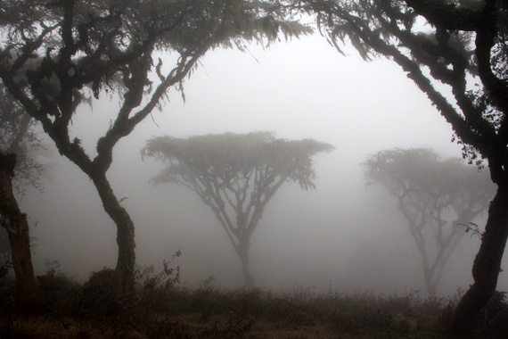 misty in ngoronogoro forest