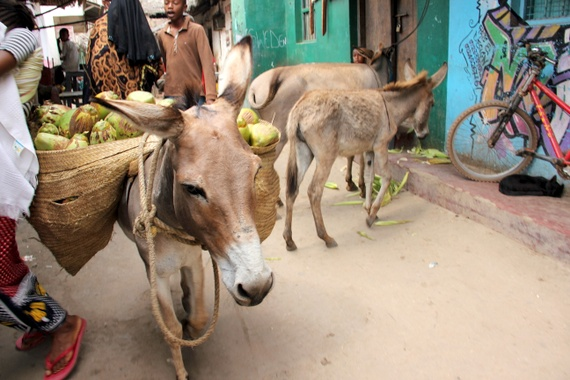 lamu kenya donkey