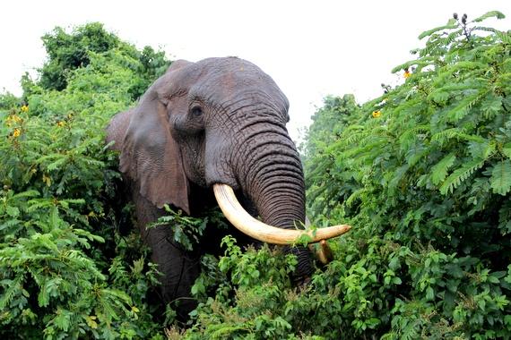Elephant close-up at The Ark resort Kenya
