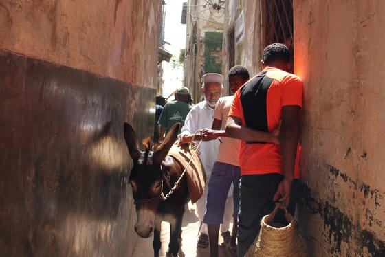 Donkeys in Lamu Kenya