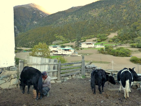 tibetan farmers of yunnan