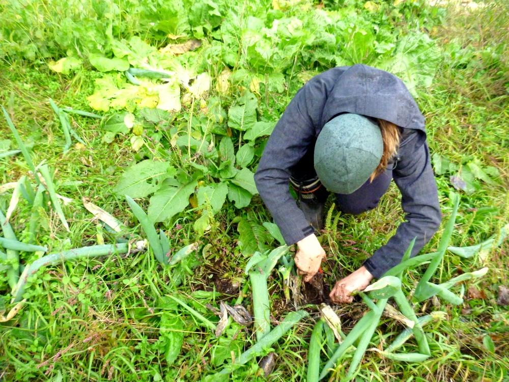 farming leeks
