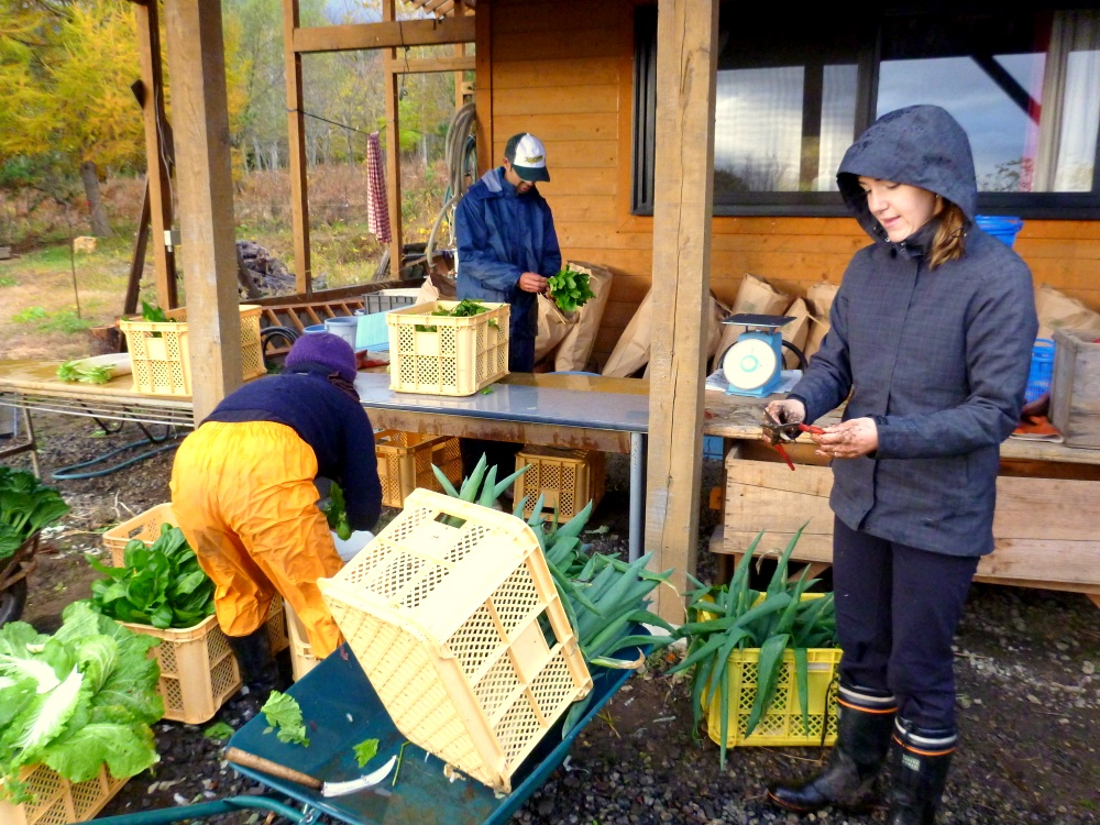 volunteering on a japanese veggie farm