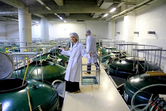 Nakemura sake distillery tours
