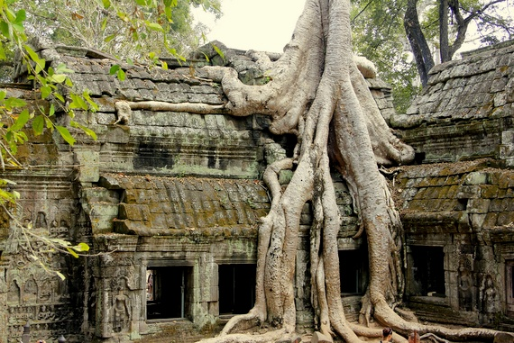 Ta Prohm Trees, Cambodia
