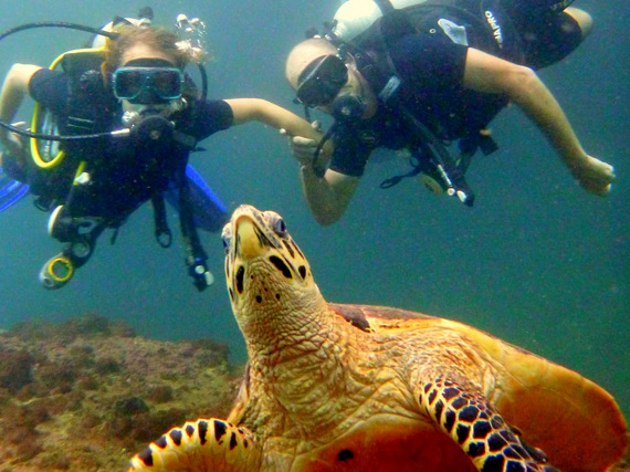 Scuba with turtles in thailand