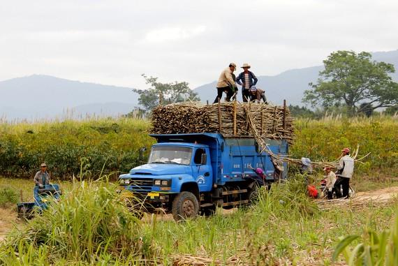 China harvesting Laos sugar cane deforestation