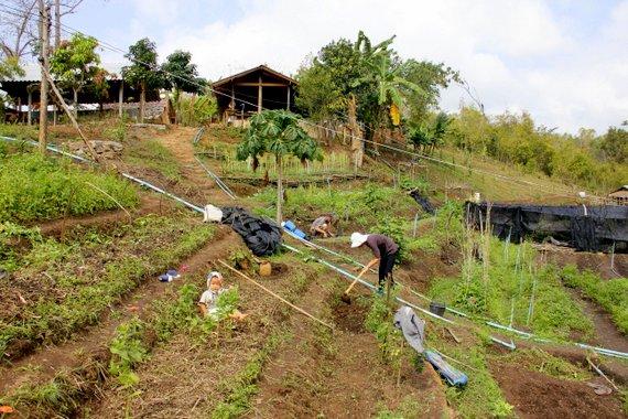 Mindful Farm Chiang Mai