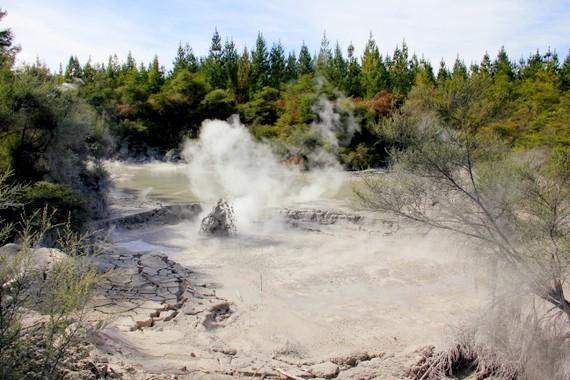 Mud pits of Rotorua
