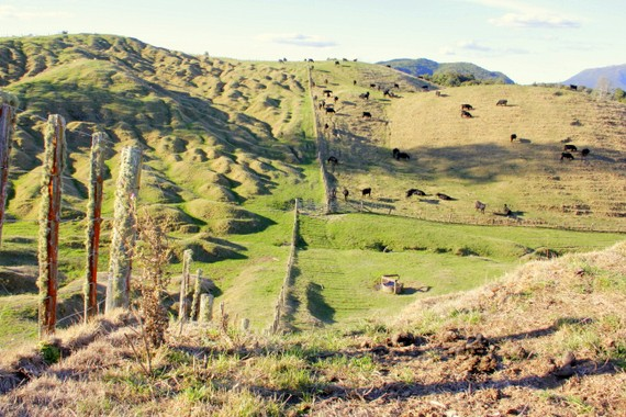 Farms of New Zealand
