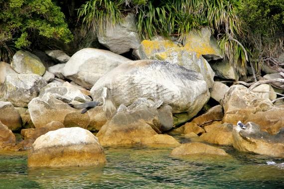 abel tasman seals