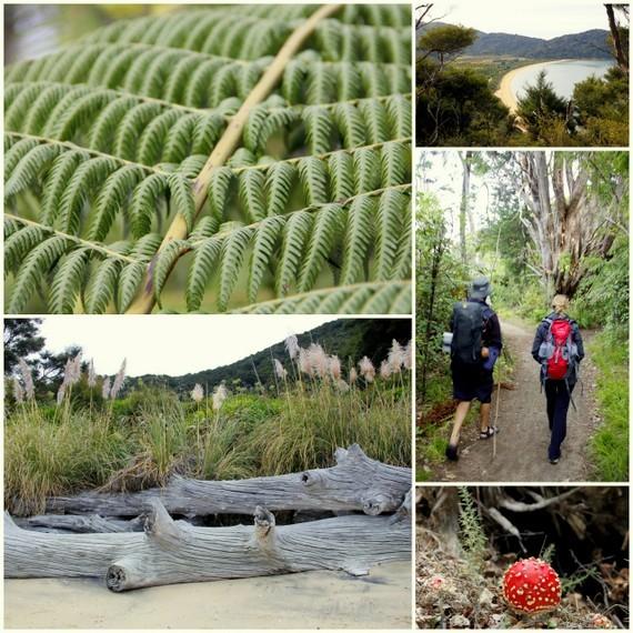 Abel Tasman -forest hike