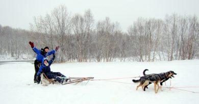 Dog Sledding the Arctic Circle [VIDEO]