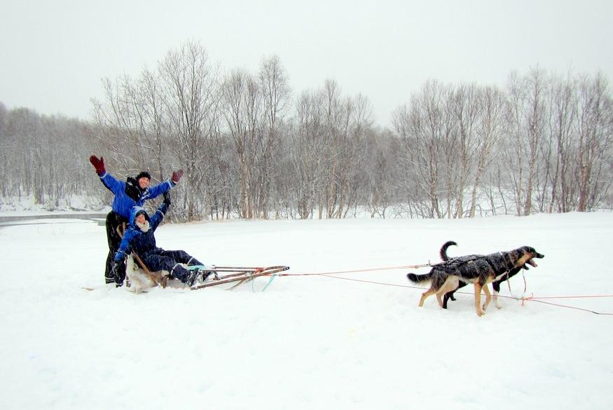 dog sledding video - 875×585