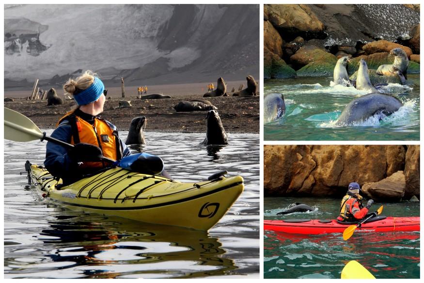 Kayaking with Seals in Antarctica