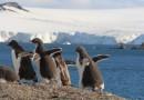 Aitcho Island Penguins-HoneyTrek.com