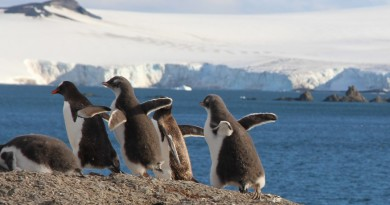 VIDEO: Antarctic Penguin Shenanigans