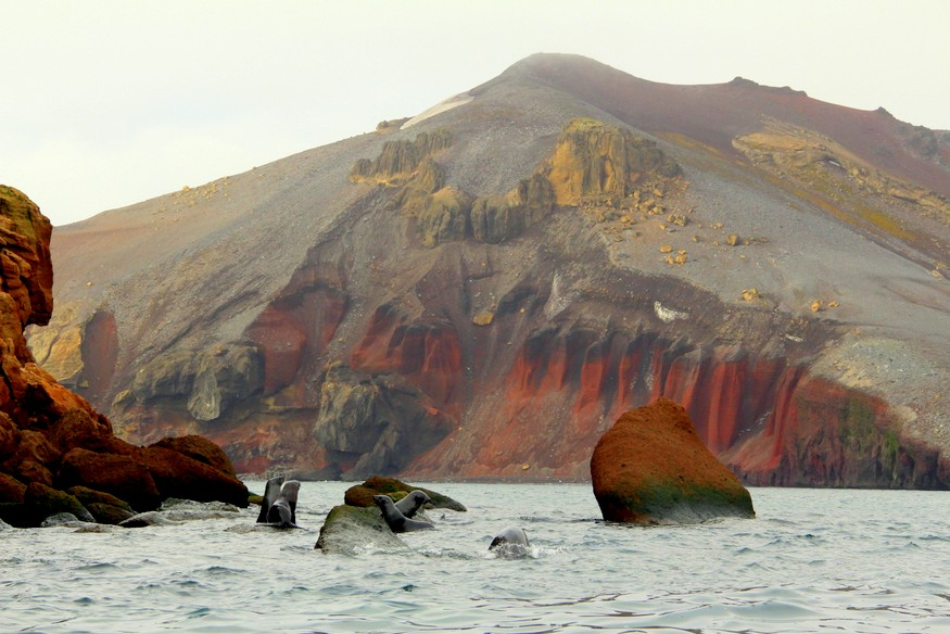 Deception Island Antarctica Seals-HoneyTrek.com