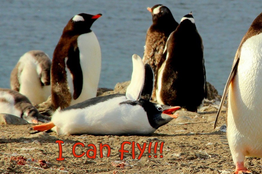 Flying penguins_HoneyTrek.com