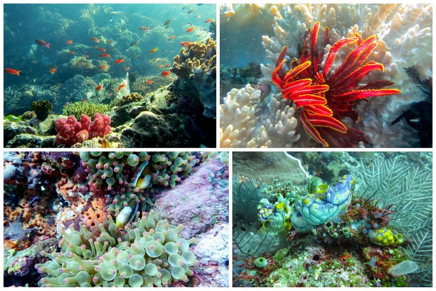 coral gardens komodo-indonesia-honeytrek-com