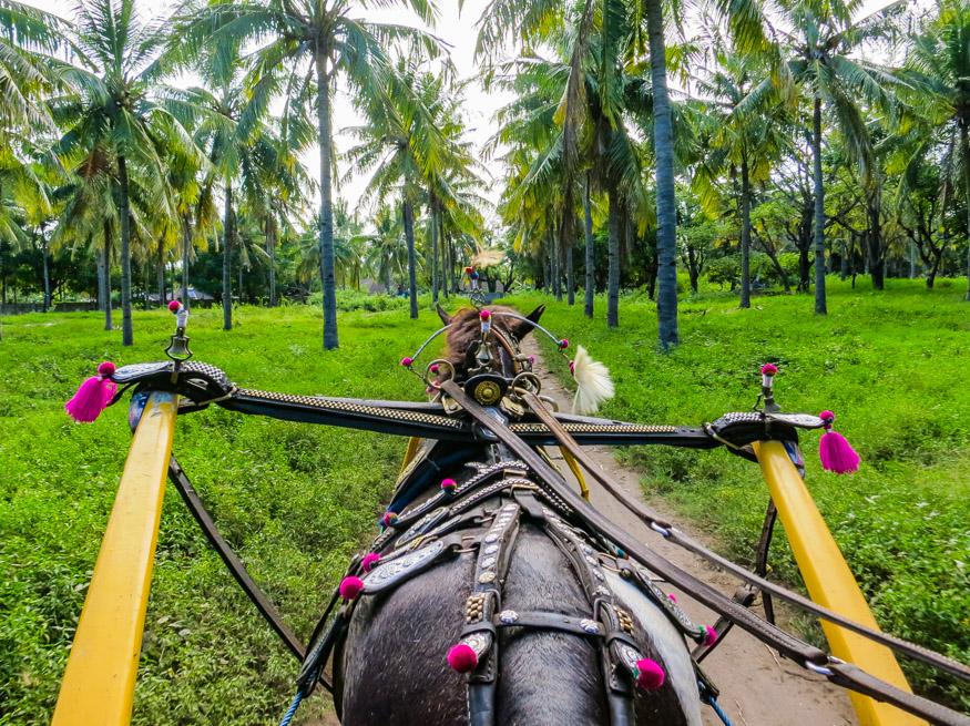 Horse drawn carts around Gili T