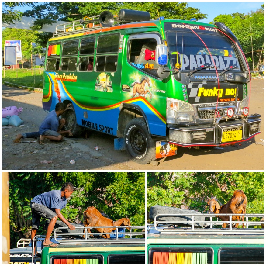 Indonesian buses