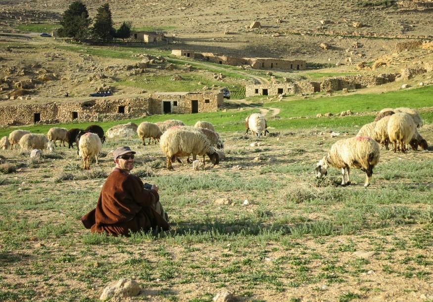 sheep herding in Petra